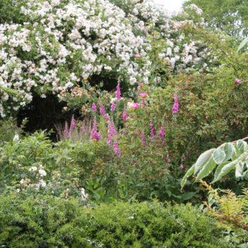 Jardin Le Philadelphus à Giverville