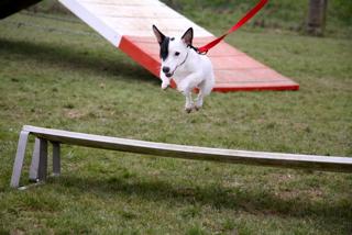 Sport canin à la ferme Beaulieu